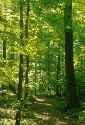 sacredgrove_large